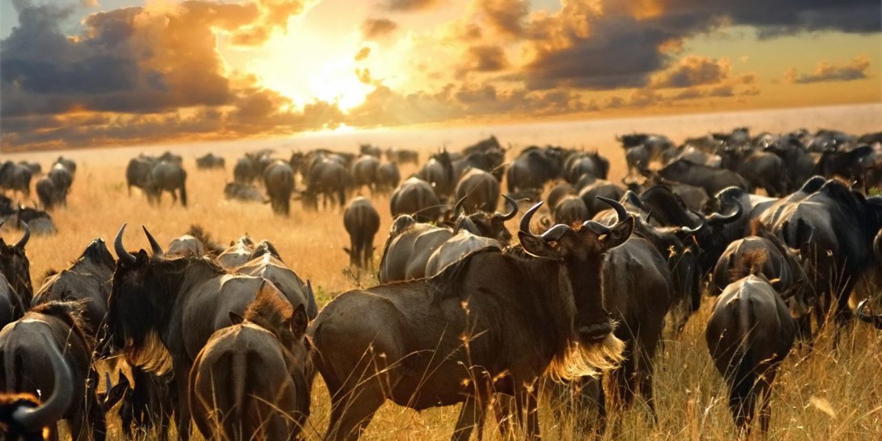 https://awesafari.com/wp-content/uploads/2018/09/wildebeest_dreamstime_xl_17312474-1280x640.jpg