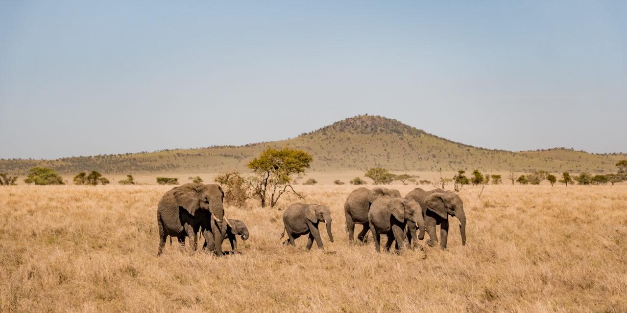 https://awesafari.com/wp-content/uploads/2020/01/FN_Tanzania_Safari_web_043-1280x640.jpg