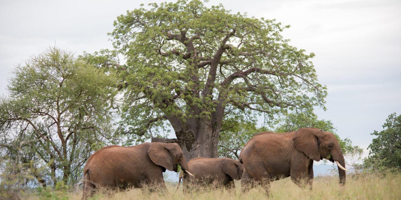 https://awesafari.com/wp-content/uploads/2020/01/tarangire-safari-tour-1280x640.jpg