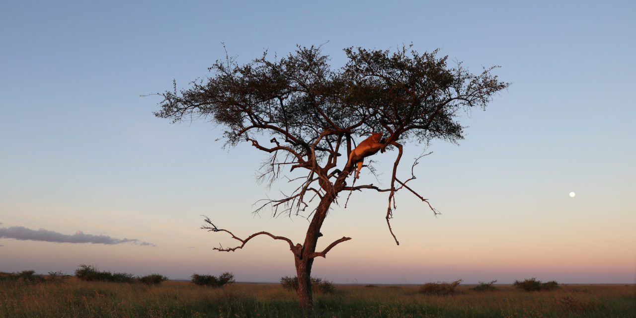 https://awesafari.com/wp-content/uploads/2020/02/Tarangire-explore-1280x640.jpg
