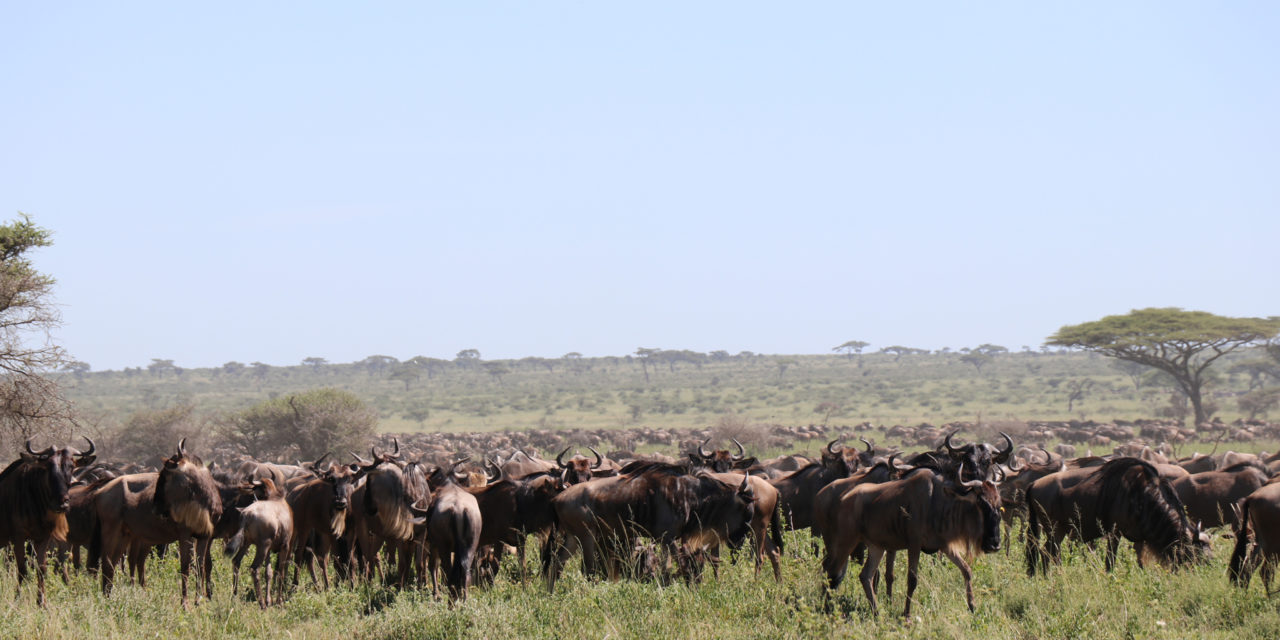 https://awesafari.com/wp-content/uploads/2020/02/serengeti-migration-tour-1280x640.jpg