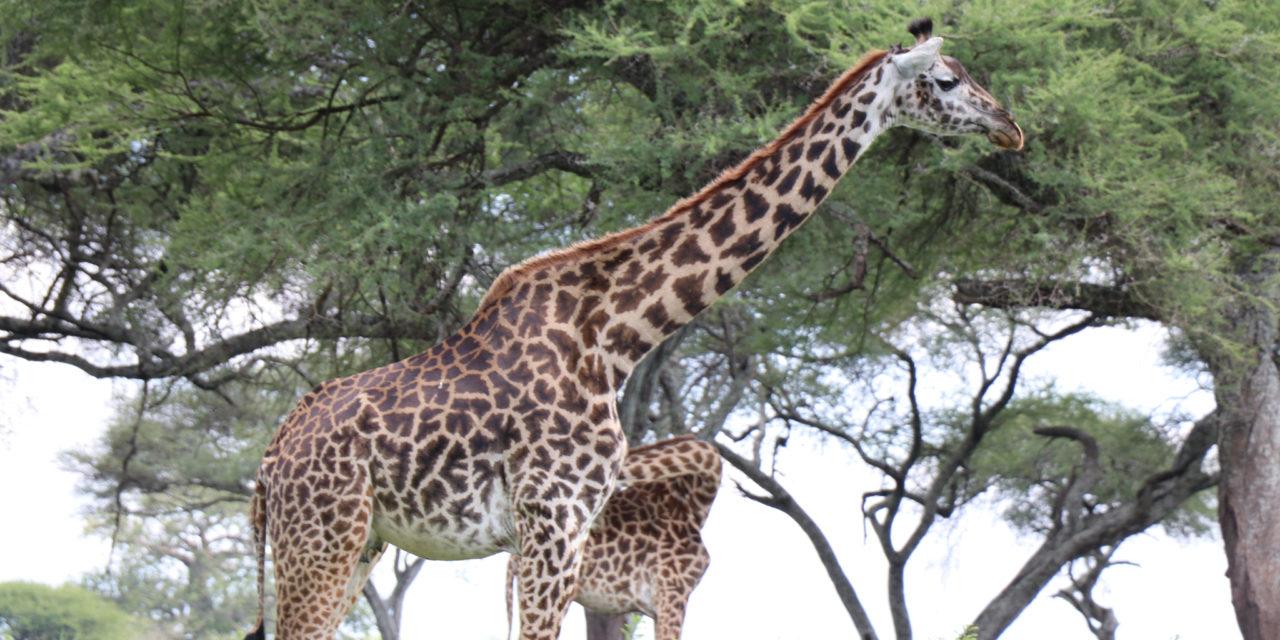 https://awesafari.com/wp-content/uploads/2020/03/awesome-african-safari-1280x640.jpg